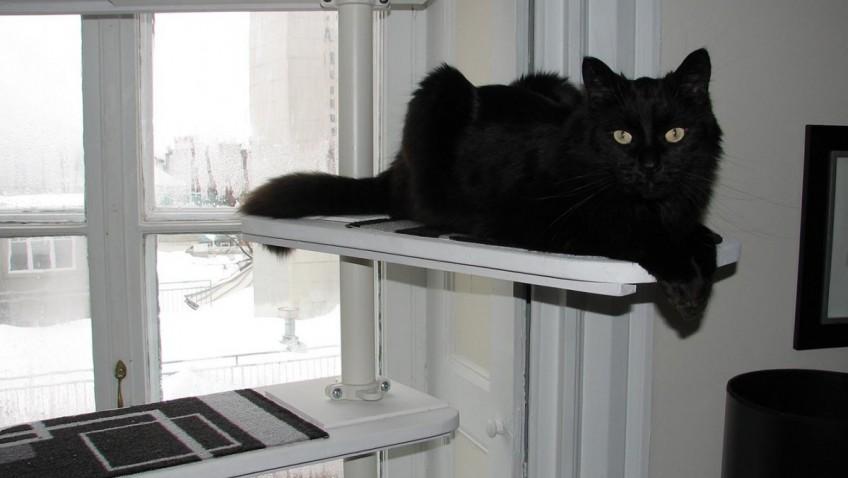 un arbre chat noir et blanc avec stolmen bidouilles ikea. Black Bedroom Furniture Sets. Home Design Ideas