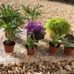Choisir les plantes et les nettoyer de leur terre