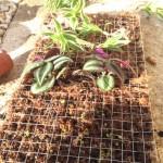 Couper le grillage pour insérer les plantes