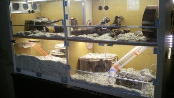 Transformation étagère KALLAX en habitat pour gerbilles