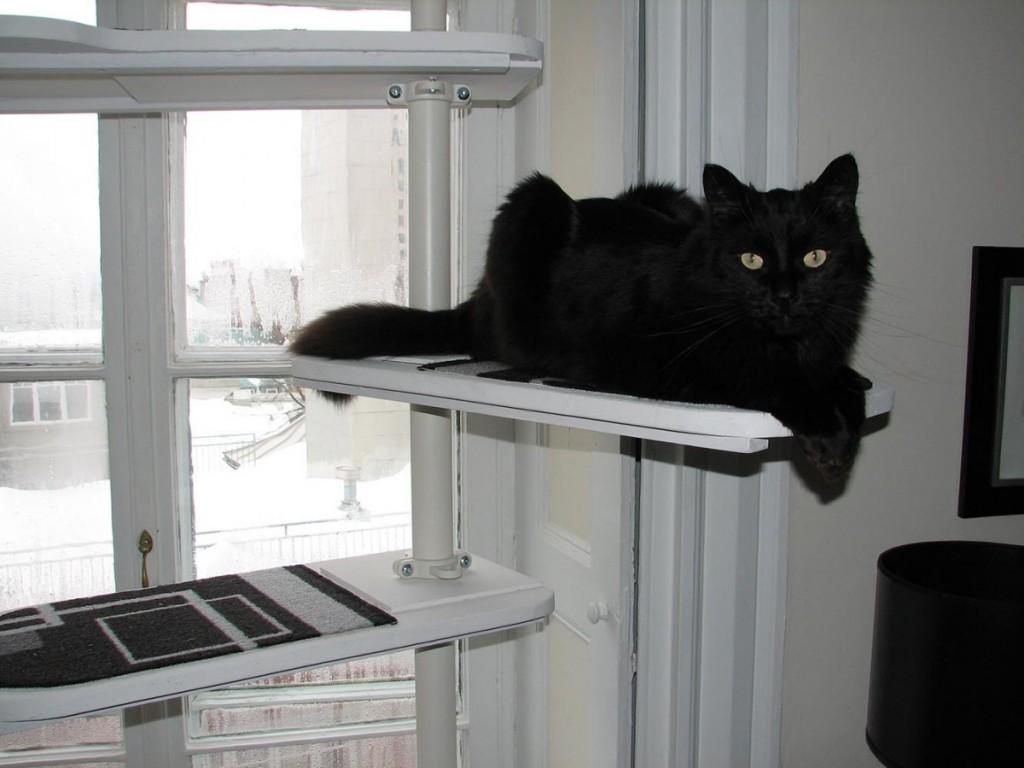 un arbre chat noir et blanc avec stolmen. Black Bedroom Furniture Sets. Home Design Ideas