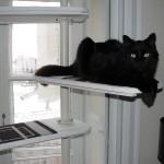 Chat sur arbre à chat Ikea