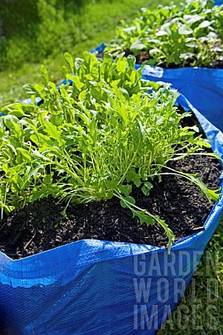 Cultiver dans un sac ikea frakta bidouilles ikea for Exterieur ikea 2015