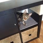 Une bibliothèque Kallax pour votre chat