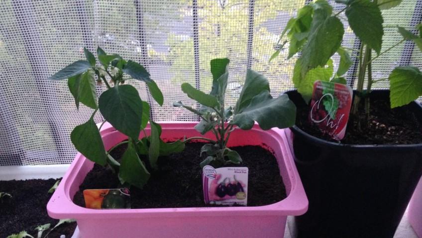 Jardini re avec les bacs pour meuble trofast bidouilles ikea for Meubles ikea detournes