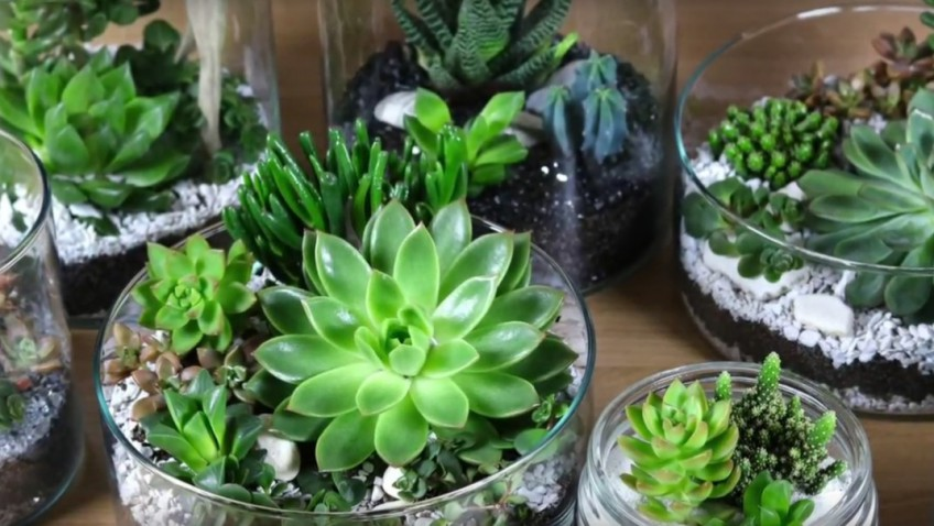 diy vid o d coration de succulente ikea. Black Bedroom Furniture Sets. Home Design Ideas