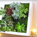 cadre-ribba-succulentes