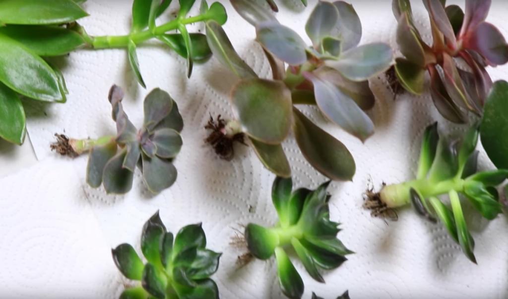 Ikea plantes d interieur bon plan les plantes de la for Plante interieur ikea