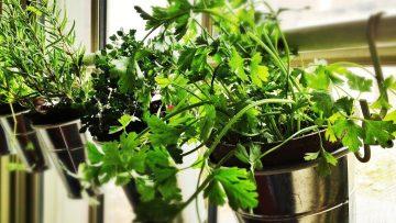 Décoration fleurie pour vos fenêtres