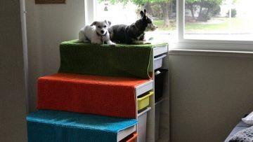 Un perchoir de fenêtre pour chien à fabriquer soi-même, avec des marches