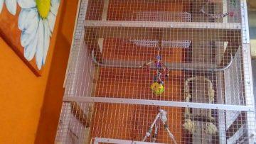 Cages pour oiseaux IKEA: Une nouvelle maison pour mes perroquets