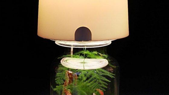 Lampe-terrarium: une bidouille très simple pour votre jardin miniature