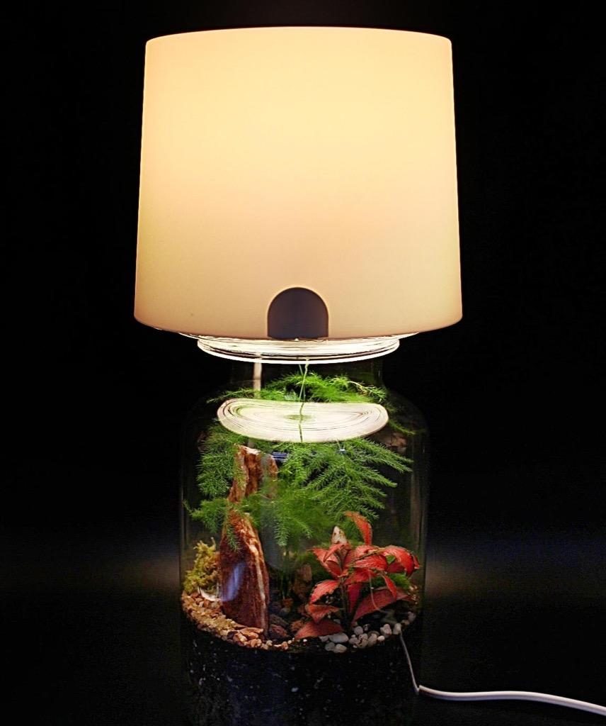 Lampe Terrarium Une Bidouille Tr 232 S Simple Pour Votre